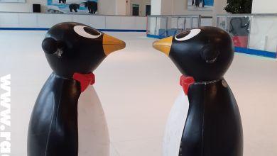 Pinguin-Rutschhilfen / Campus-Eiswelt Wolfen