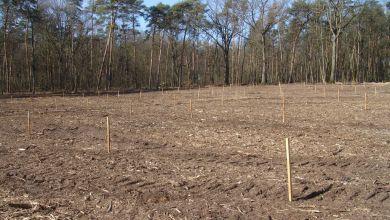 Auf einer Fläche von drei Hektar wurden 594 Pfropflinge aus insgesamt 99 Genotypen gepflanzt