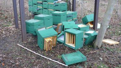 zerstörte Bienenkörbe