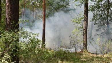 Waldbrand bei Genthin
