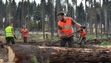 Soldaten der Bundeswehr schälen im Forst bei Harzgerode Fichtenstämme
