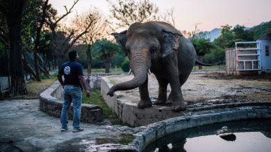 Tierarzt Amir Khalil und Elefant Kaavan