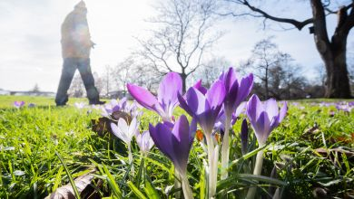 Frühling in Niedersachsen