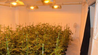 Indoor-Plantage in Coswig