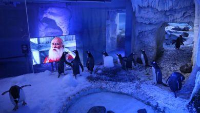 Pinguine schauen Weihnachtsfilme