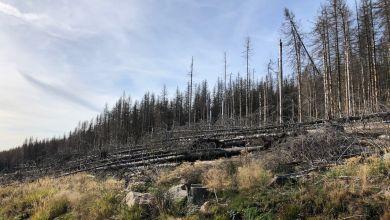 Toter Wald an der Brockenstraße