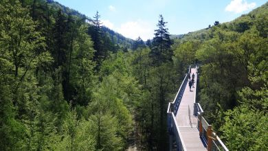 Touristen wandern auf dem Baumwipfelpfad am Nationalpark Harz in Bad Harzburg