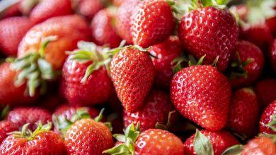 Erdbeerzeit ist die schönste Zeit!