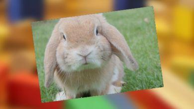 Süßes Kaninchen auf einer Wiese