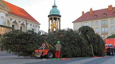 Weihnachtsbaum für Magdeburg