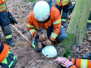 """Feuerwehr rettet """"Flinte"""" aus Fuchsbau"""
