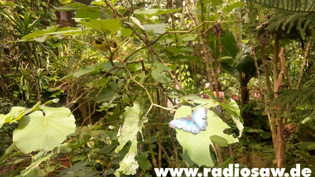 """Foto: radio SAW<br /><strong class=""""verstecktivw"""">mission-entdecken</strong>"""
