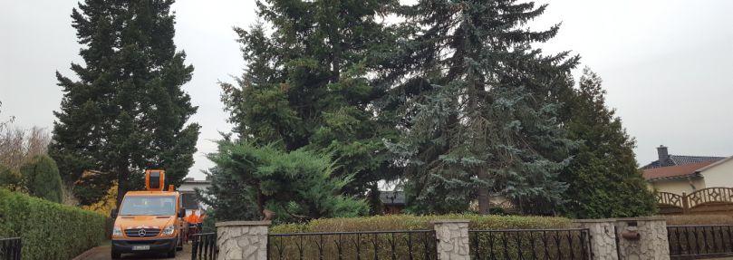 der hallesche weihnachtsbaum kommt aus kabelsketal radio saw. Black Bedroom Furniture Sets. Home Design Ideas