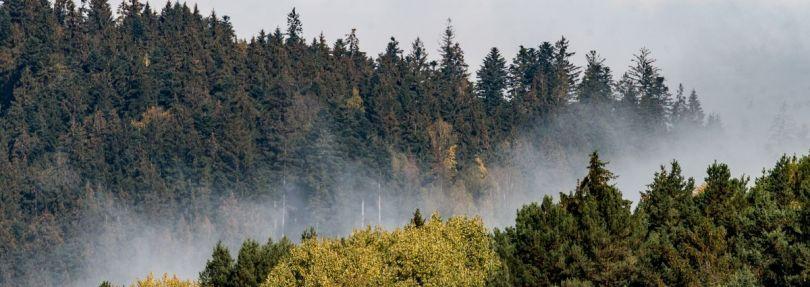 Bayerischen Wald