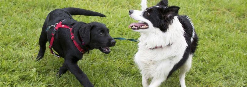 zwei hunde spielen miteinander