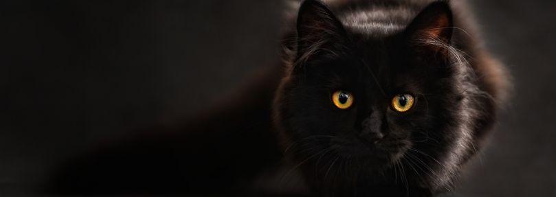 Enge schwarze Pussy wird gefickt