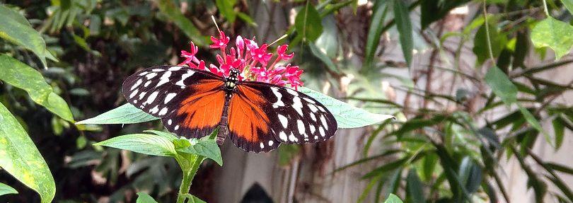 Schmetterlingshaus Wittenberg