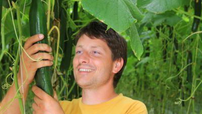 Gurken-Plantage