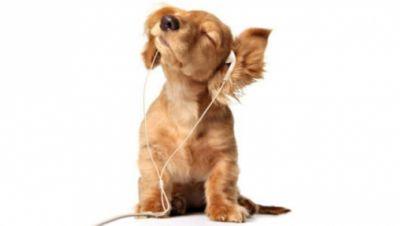 Hund mit Kopfhörern