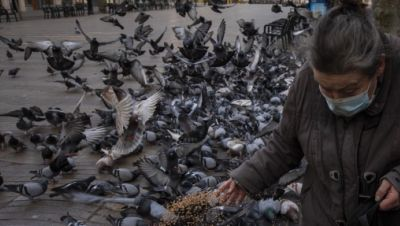 Tauben in Zeiten von Corona