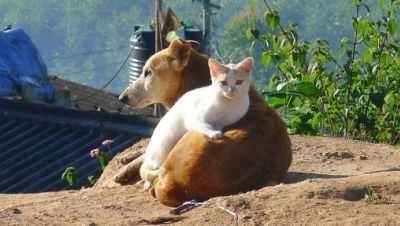 Shenzhen verbietet den Verzehr von Haustieren