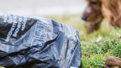 Ein Mann greift auf einer Wiese mit einem Hundekotbeutel nach einem Hundehaufen.