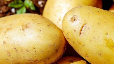 Die Kartoffelversorgung bleibt gewährleistet