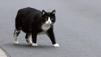 Land zahlt Kastration von streunenden Katzen.