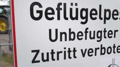 """Ein Schild mit dem Schriftzug """"Geflügelpest"""" hängt an einem Zaun eines Geflügelmastbetriebes in Rothenkirchen bei Rambin im Landkreis Vorpommern-Rügen."""