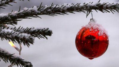 Nadelzweig mit Schnee und Weihnachtskugel