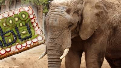 Elefant Abu