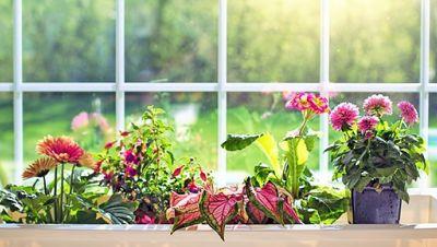 Fenster mit blühenden Blumen