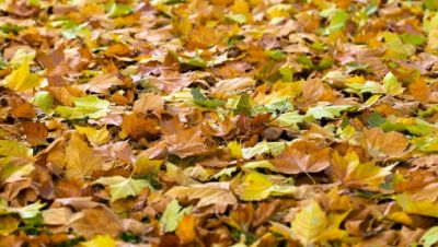 Symbolbild: Laub im Herbst